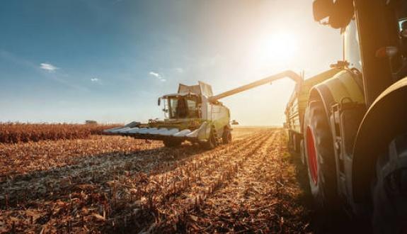 maatalous
